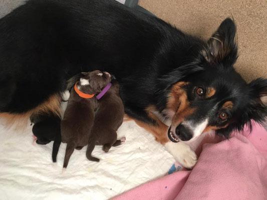 Mama und die Welpen