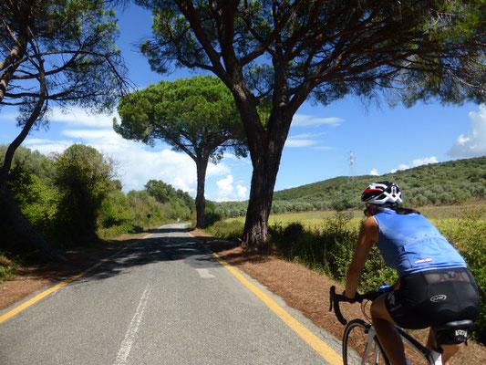 Toskana und Allee und Rennrad und Urlaub macht Traum