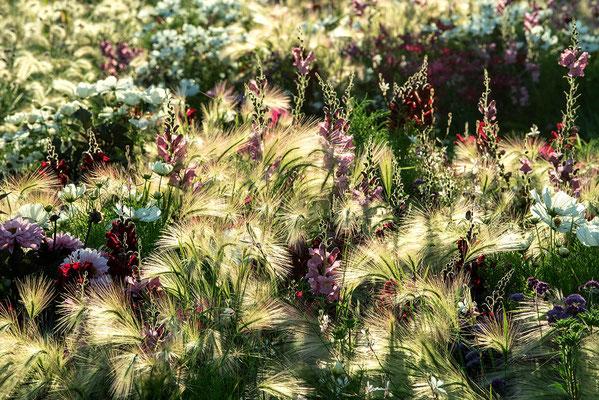 Gartenfotografie von Danièle  Dugré