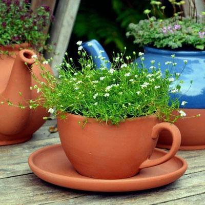 Teetassen-Pflanztopf mit Untertasse - bringen Sie mit diesem hübschen kleinen Pflanztopf ein wenig Abwechslung in Ihre Blumentopfsammlung. www.the-golden-rabbit.de