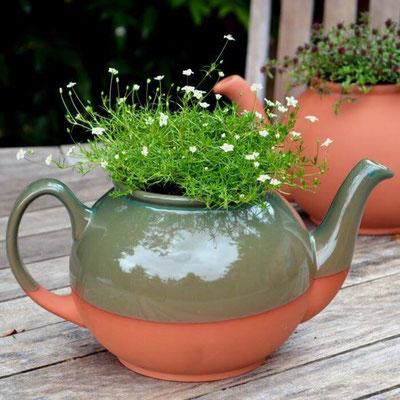 Teekannen-Pflanztopf: ein britischer Klassiker!
