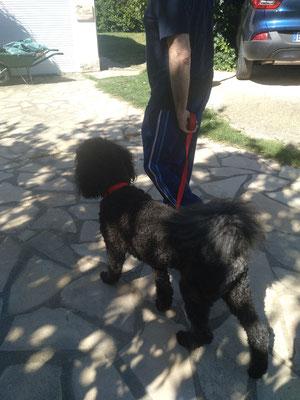 Solomone 🐶 rééducation du chien adulte 1ere séance