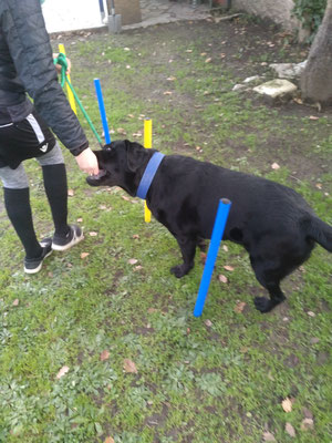 Initiation Agility pour Lucky