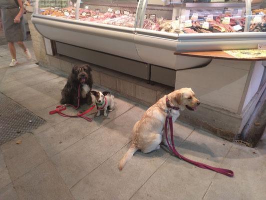 Obi, Ice et Guapa (séance au marché de Lunel)