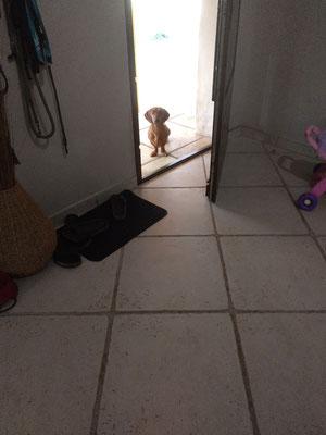 Ficelle apprend à attendre le signal pour rentrer