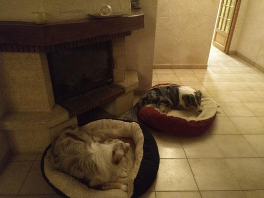 Leslie et Mambo (Prestation de Pet Sitting)