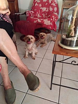 Chipie et Lola