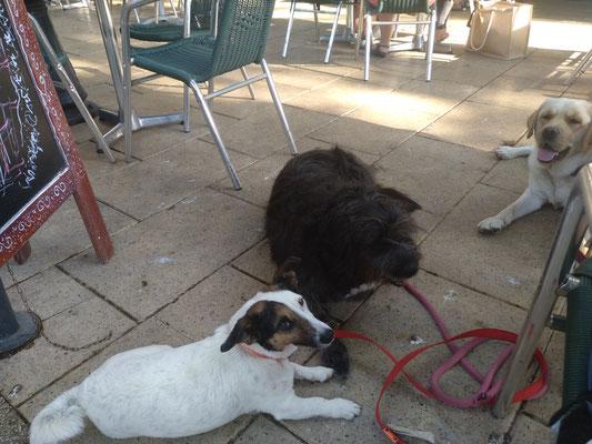 Dernière Séance Pour Obi 🐶 Accompagnée de mes chiennes Ice et Guapa 🐶🐶