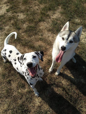 Daisy et Anoki (Prestation de Pet Sitting)