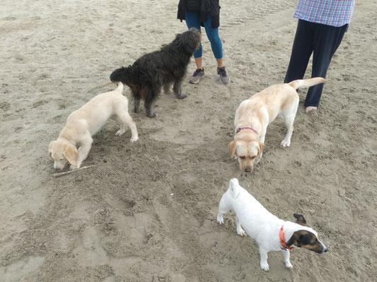 Aika, Obi, Ice et Guapa (Mini Séance Collective à la plage)