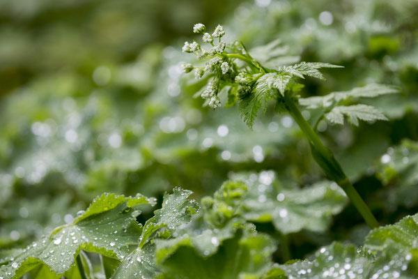 Alle Kräuter, die für unsere Produkte verwendet werden, stammen aus unserem eigenen Kräutergarten und sind natürlich Bio-Zertifiziert.
