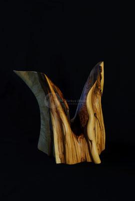Widderkopf, Olivenholz geölt, 30 cm