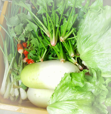 新鮮な冬野菜