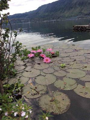 水深500mもあるトバ湖