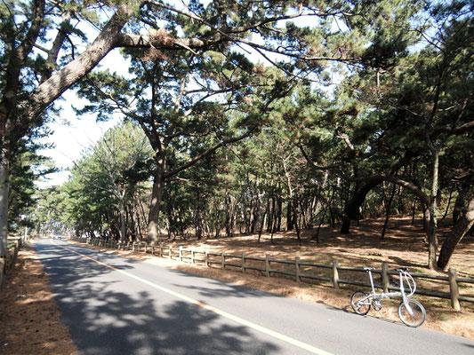 ひびき灘サイクリングロード(遠賀宗像自転車道線)- 名勝さつき松原