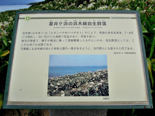 ひびき灘サイクリングロード(遠賀宗像自転車道)- 直方北九州自転車道- 夏井ケ浜