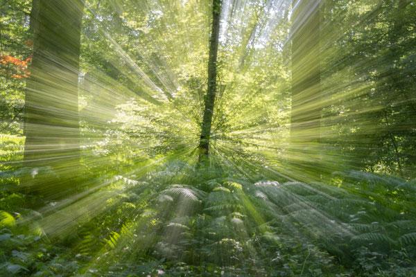 Nature-zooming en sous bois