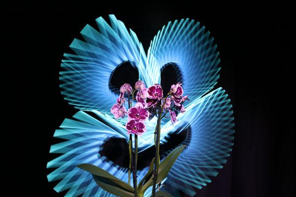 Le smiley de l'Orchidée