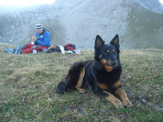 Allgäuer Alpen Rana