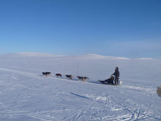 Schlittenhundgespann Winter Norwegen