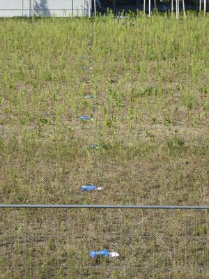 Profilmessung magnetischer Wechselfelder auf einem Grundstück; Datenlogger im 5 m Abstand auf der Wiese liegend