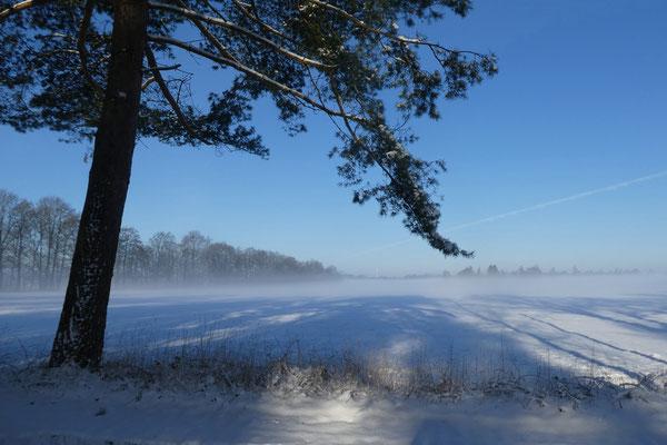 Angelika Novak - Wintermorgen in Friesland