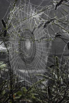 Angelika Nowak - Spinnen-Architektur