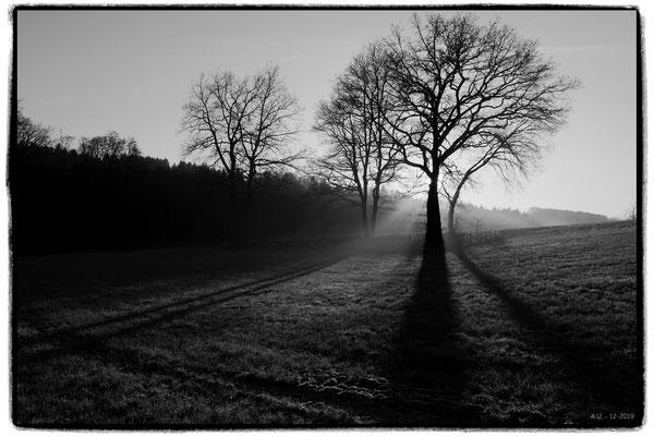 Andreas Ulman - Baum im Gegenlicht - Wilde Ennepe