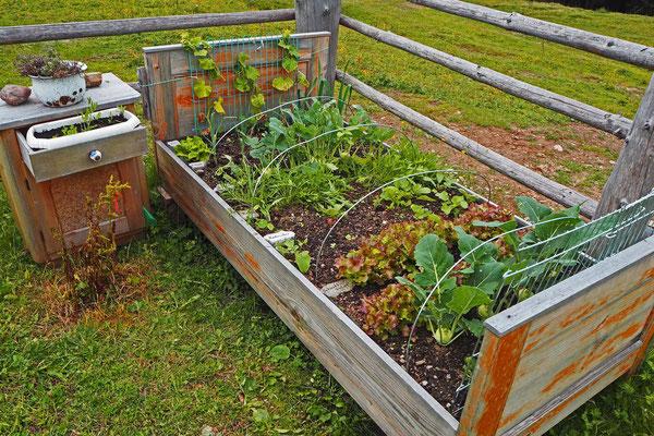 Regina Reininghaus - Gemüsebett