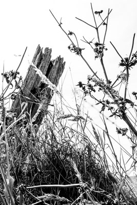 Platz 4 - 10  Fotograf: Helmut Willnat / Titel: Grasfroschperspektive