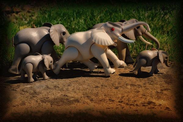 "Peter Suck ""Spaziergang der Elefantenherde"""