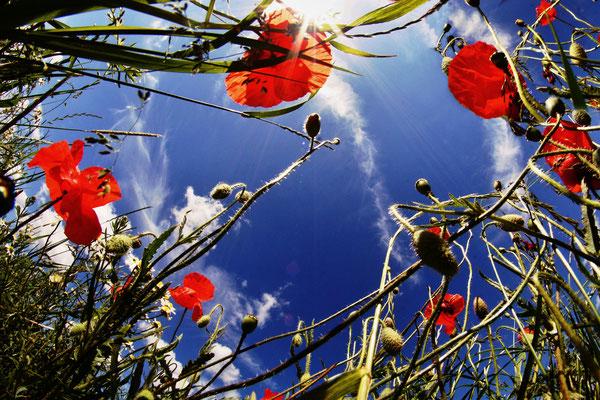 Blumenwiese 3