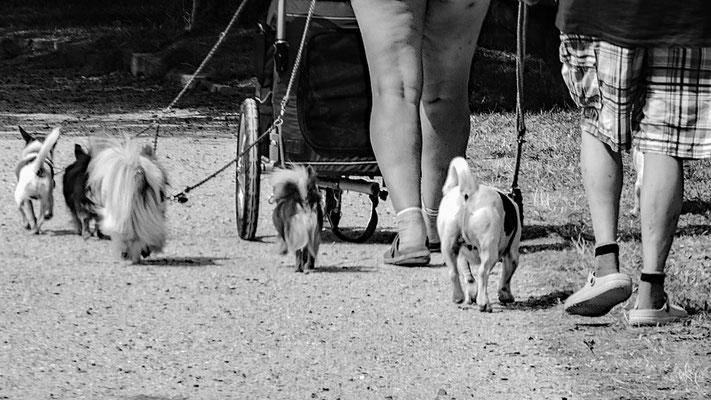Hunde und Beine
