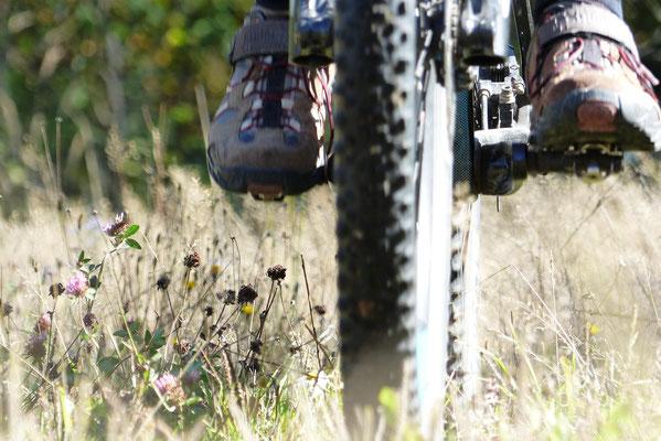 Fotografin: Renate Weiß / Titel: Biketour