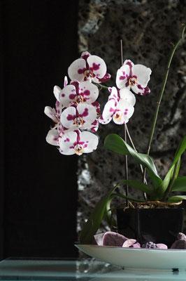 Simone Pawlowske - Orchidee