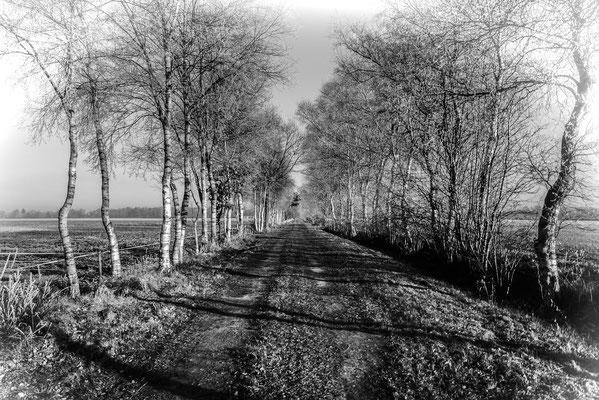 Moorallee in Schwarz-Weiß