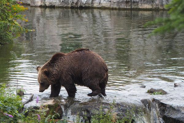 Regina Reininghaus - Bär