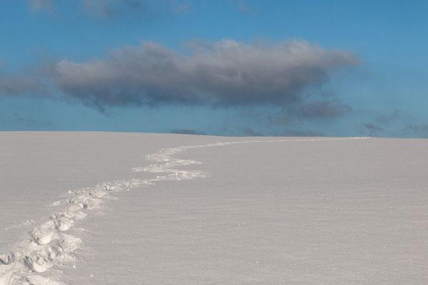 Helmut Willnat - Schneewüste