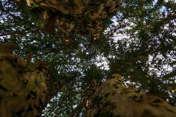 Fotografin: Pia Brembt-Wilbers / Titel: Zwischen Bäumen