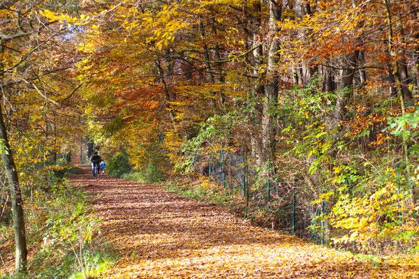 Farbenspiel der Natur- Glörtalsperre im Herbst 2016