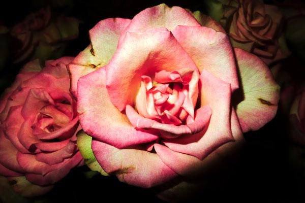 Rolf Engelkamp - Ein Blumengruß für Dich