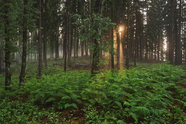 Morgenstimmung am Lichtenhainer Panoramaweg. ISO 50, 30mm, f/8.0, 1/5sek. (Polfilter).