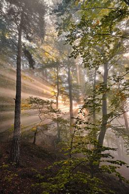 Eindrucksvoller Sonnenaufgang im Wald unterhalb des Liliensteins. ISO 100, 24mm, f/5.0, 1/100sek.