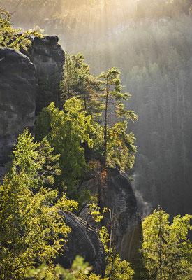 Herbstmorgen im Polenztal. ISO 200, 62mm, f/4.0, 1/400sek.