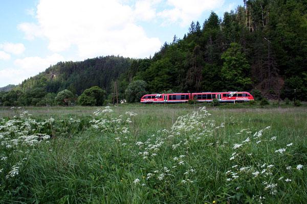 Das Sebnitztal ist auch bekannt für seinen Artenreichen und teilweise sehr seltenen Pflanzenbewuchs, so wie hier die Wildwiesen bei Goßdorf-Kohlmühle, Mai 2008, Foto: Jörg Feudel