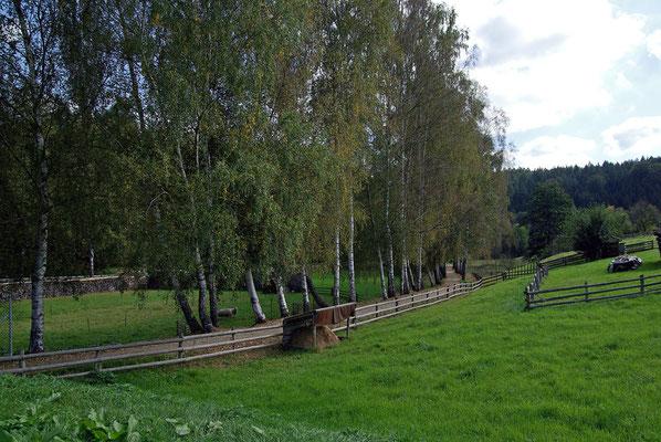 Die 3 Kilometer bis zum ersten Etappenziel: Gleich hinter Lohsdorf geht es bergab zum Eingang ins Schwarzbachtal, die vielen Birken am Bahndamm werden wohl dran glauben müssen ... 26.09.09