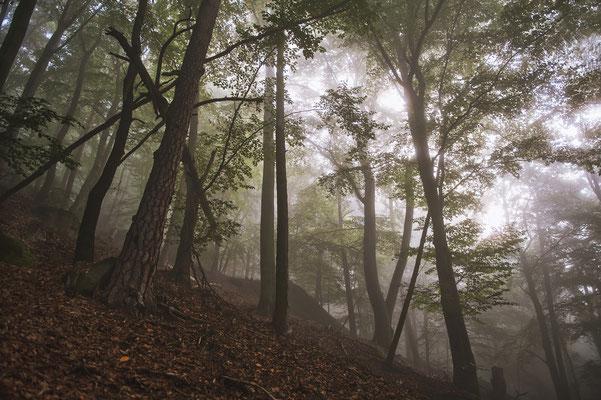Im Nebelwald unterhalb des Liliensteins. ISO 100, 24mm, f/2.8, 1/100sek.