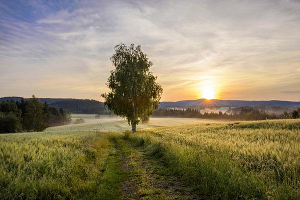 Morgenstimmung am Lichtenhainer Panoramaweg. ISO 50, 30mm, f/18.0, 1/20sek. (Haida Grauverlauf).