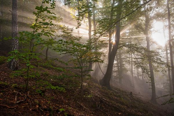Ein ähnliches Szenario, nur mit etwas mehr Nebel. Im Wald unterhalb des Liliensteins. ISO 100, 24mm, f/5.0, 1/30sek. (Polfilter).