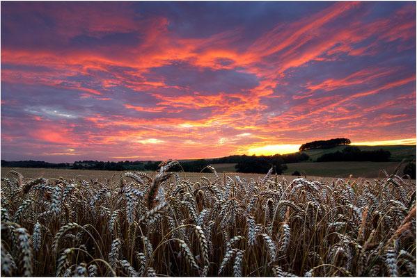 Sommerspektakel zwischen Neustadt und Langenwolmsdorf, nach einem Sommergewitter glüht der Abendliche Himmel. ISO 125, BW 18mm, F/7.1, 1/13, 1/6 & 1/3sek. (HDR )